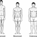 De drie lichaamstypen