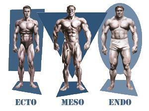Lichaamstypen atletisch